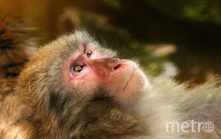 В Индии стая обезьян насмерть закидала мужчину кирпичами. Фото pixabay