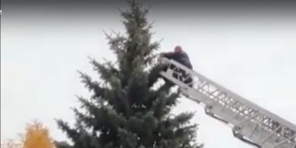 В Тамбове с макушки высокой ели спасатели сняли мужчину. Видео