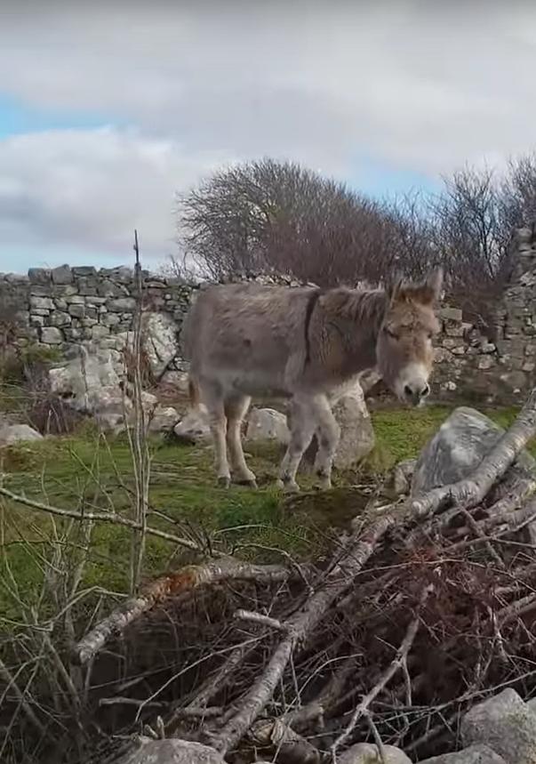 Поющая ослица из Ирландии. Фото Скриншот, Скриншот Youtube