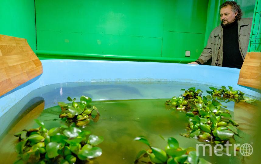 """Крокодилы наслаждаются жизнью в новом бассейне. Фото Алена Бобрович, """"Metro"""""""