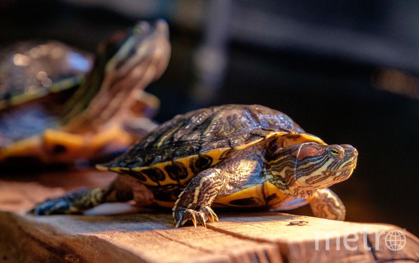 """В новом бассейне нашлось место и черепахам. Фото Алена Бобрович, """"Metro"""""""