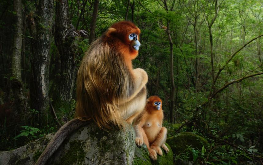 Золотая парочка. Фото Wildlife Photographer of the Year