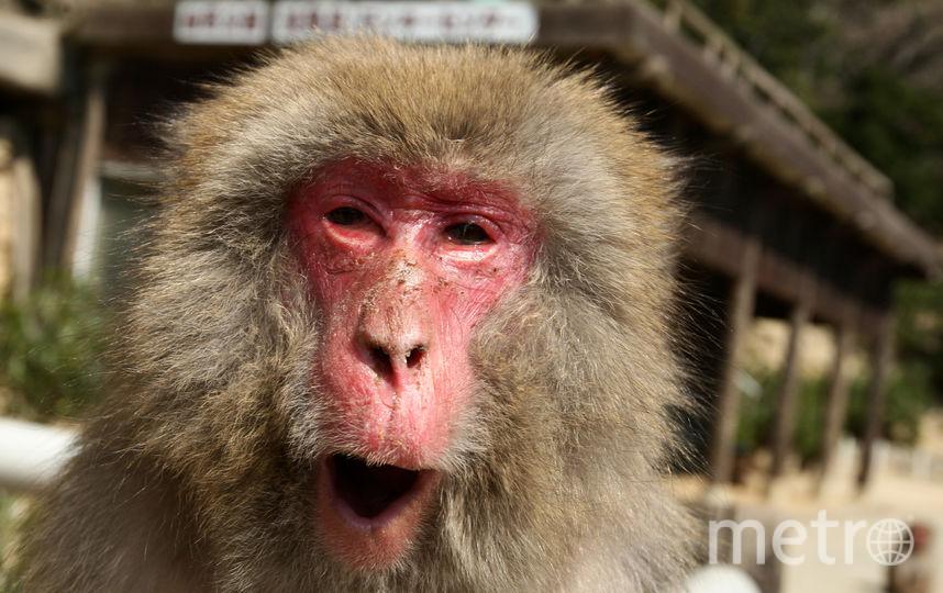Как правильно чихать и кашлять, чтобы никого не заразить. Фото Getty