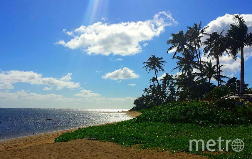Гавайи. Фото pixabay