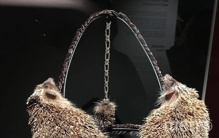 """Предмет женского белья создан голландским таксидермистом Клэром Тэдом и называется """"Дивы в эпицентре"""". Фото Скриншот Instagram: @ksekusksekus"""