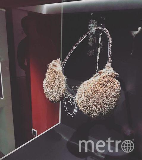 """Предмет женского белья создан голландским таксидермистом Клэром Тэдом и называется """"Дивы в эпицентре"""". Фото Скриншот Instagram: @tinasamigulina"""