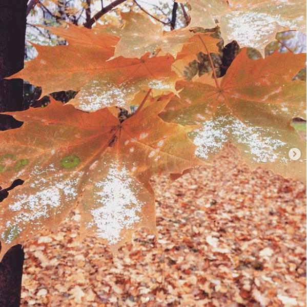 Хорошёво-Мнёвники. Фото Скриншот instagram.com/bectabecta/.