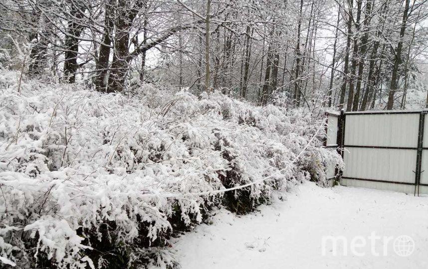 Снег недалеко от Усть-Луги. Фото Александр Важельский | vk.com/spb_today., vk.com