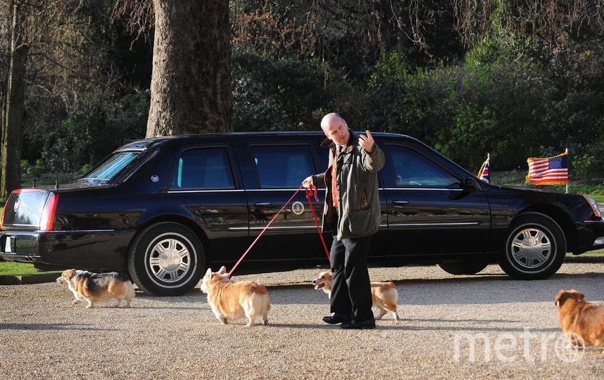 Королевские корги, 2009 год. Фото Getty