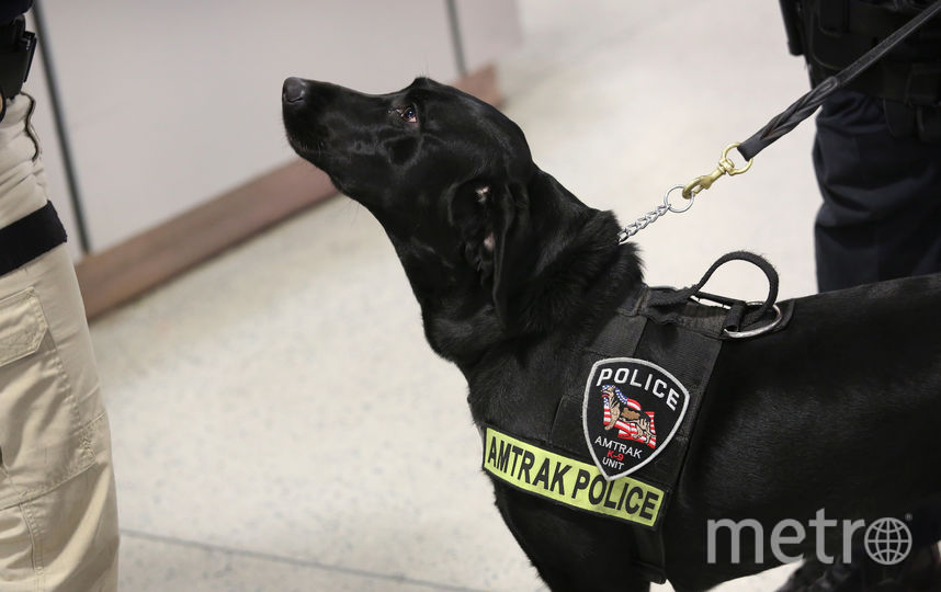 Собака-полицейский. Фото Getty