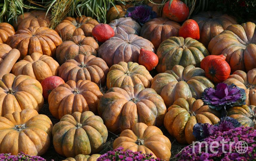 Крупноплодные тыквы. Фото Василий Кузьмичёнок