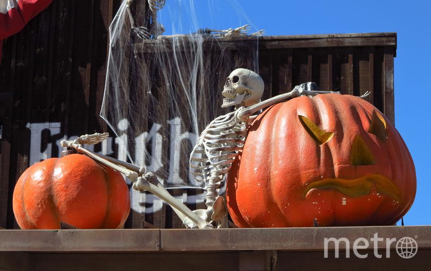 Украшение из тыкв к Хэллоуину. Фото Василий Кузьмичёнок