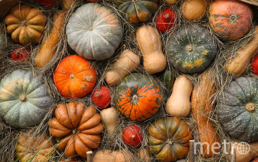Все три вида тыкв. Фото Василий Кузьмичёнок