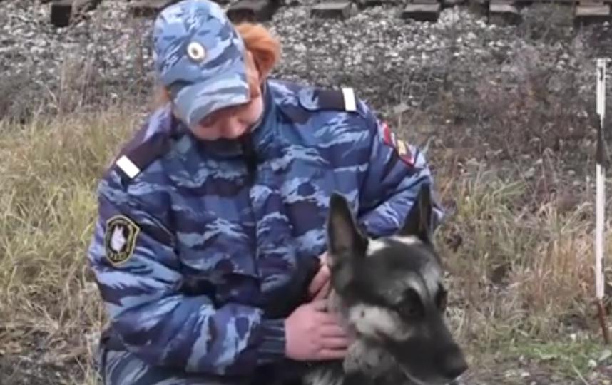 Полицейский пёс Нарзан помог спасти пропавшего мальчика. Фото РЕН