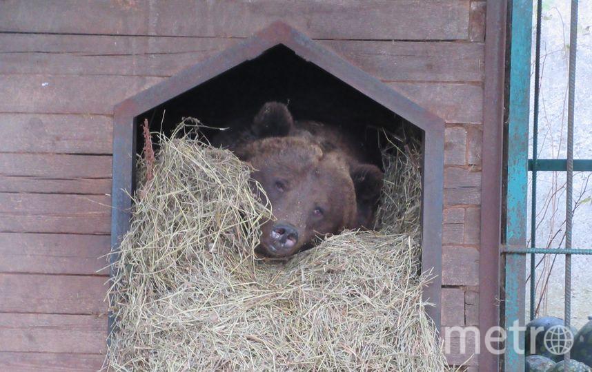 В реабилитационном центре для диких животных, что в посёлке Рапполово Всеволожского района, сейчас живут 14 медведей.