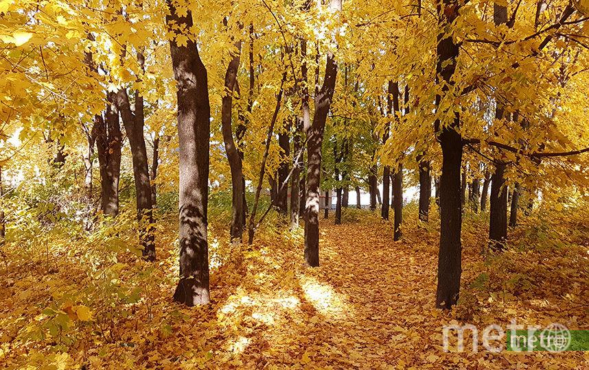 На западе Москвы на месте промзоны появятся парки, бульвары и набережная. Фото Василий Кузьмичёнок