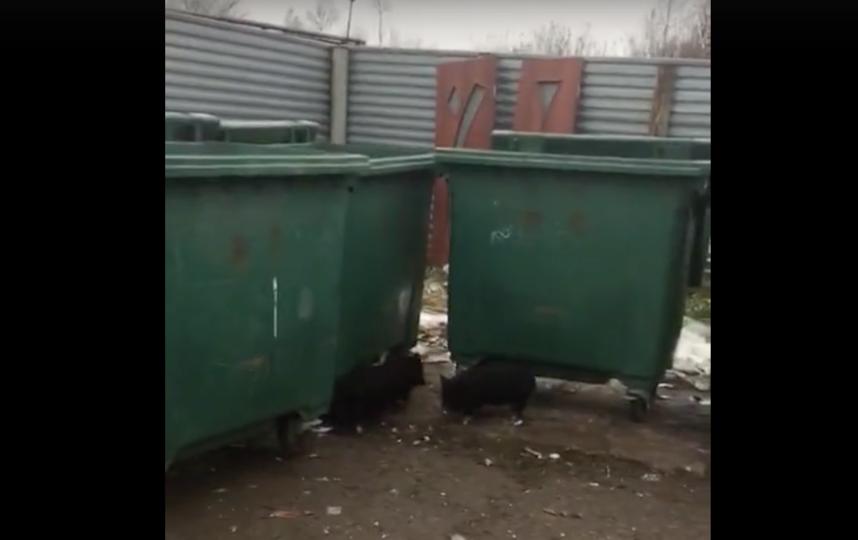 """Скриншот видео из паблика """"Жизнь в Кудрово"""". Фото vk.com/kudrovolife, vk.com"""