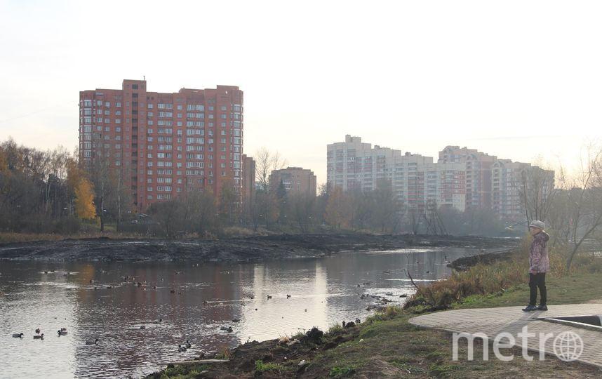 Бобры и берега реки после старта работ по благоустройству. Фото Владимир Малёшин, Министерство экологии и природопользования Московской области
