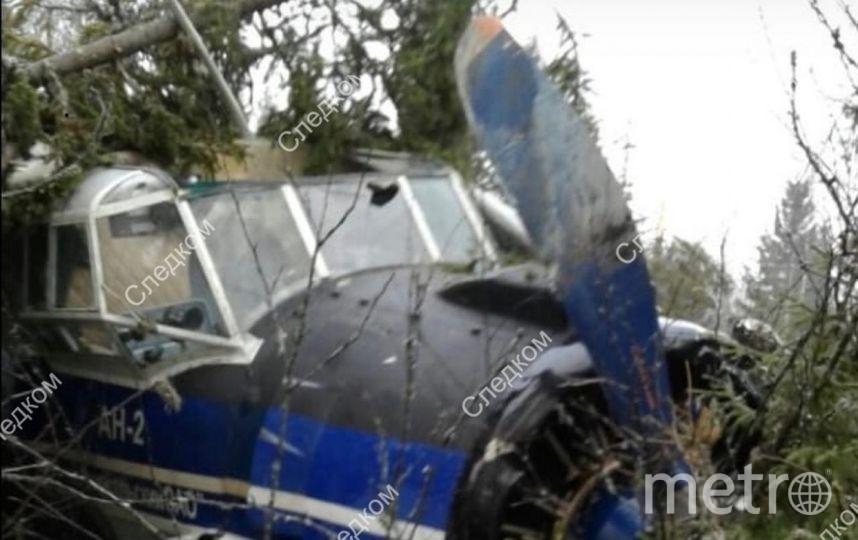 "Фото Ан-2, севшего в лесу в тайге. Фото http://szsut.sledcom.ru, ""Metro"""