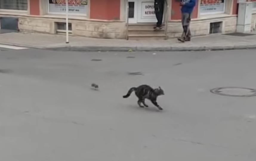 Скриншот видео. Фото  Daniel Kalemasi / YouTube, Скриншот Youtube