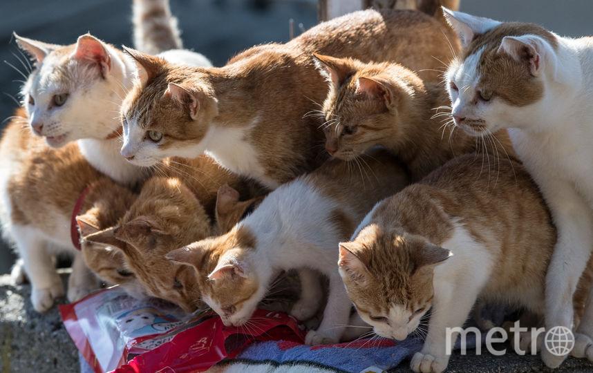 Все выпавшие из окна животные живы. Фото Getty