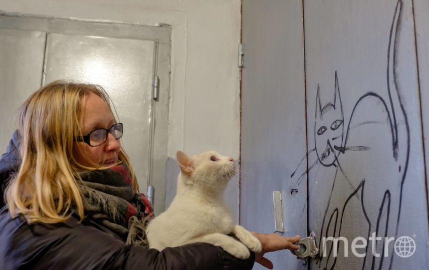 """Эрмитажные коты стали артистами. Фото Алена Бобрович, """"Metro"""""""