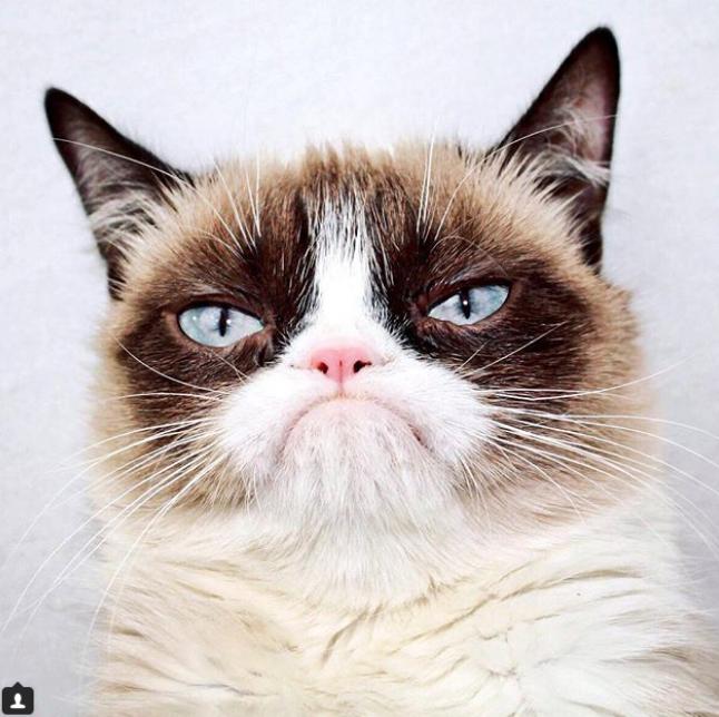 Грампи Кэт. Фото instagram/realgrumpycat