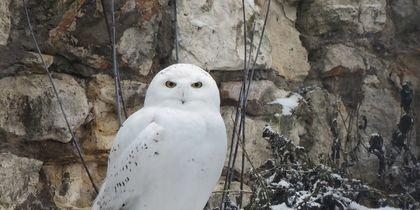 5 редких жителей Москвы: Какие птицы меняют