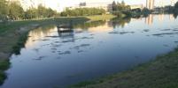 В Петербурге возбуждено уголовное дело по факту загрязнения реки Новой