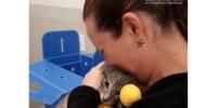 Обгоревший кот Мейсон вернулся домой после пожаров в Калифорнии: видео