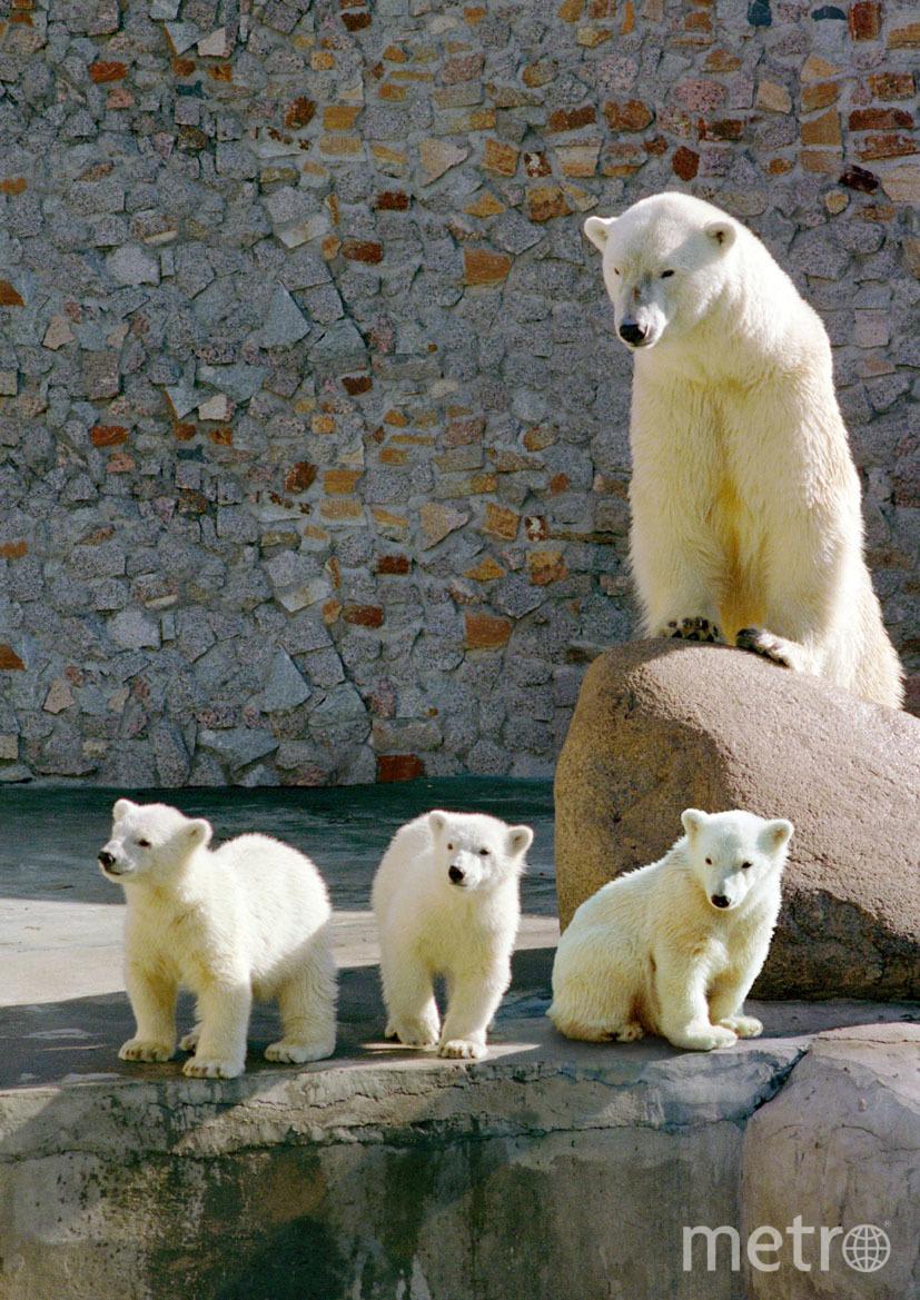 Медведица Услада. Фото vk.com/spbzoopark, vk.com