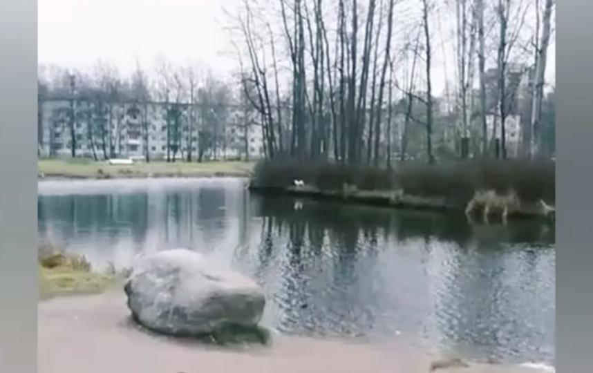 "Скриншот видео ""Кошкиспас"" / vk.com/koshkispas. Фото Suzan Flower, vk.com"
