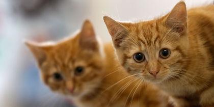 Учёные раскрыли главный секрет кошек