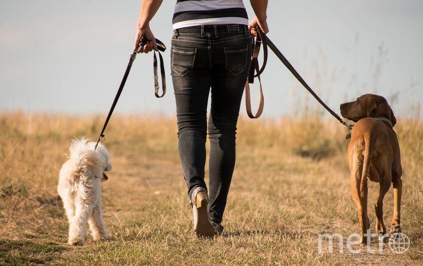 Яйца токсокар присутствуют на подошве обуви каждого десятого владельца собаки и на лапах каждого пятого пса. Фото Pixabay