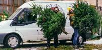 Где купить живые елки и пихты в Санкт-Петербурге