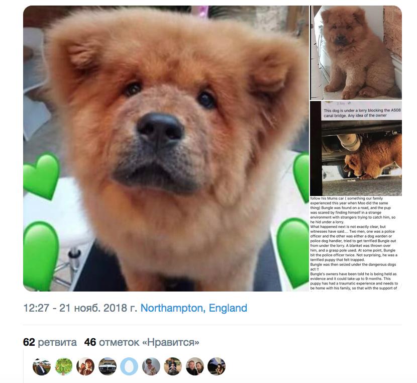 В Британии отправили в питомник щенка чау-чау после того, как он укусил полицейского. Фото скриншот https://twitter.com/NNweather