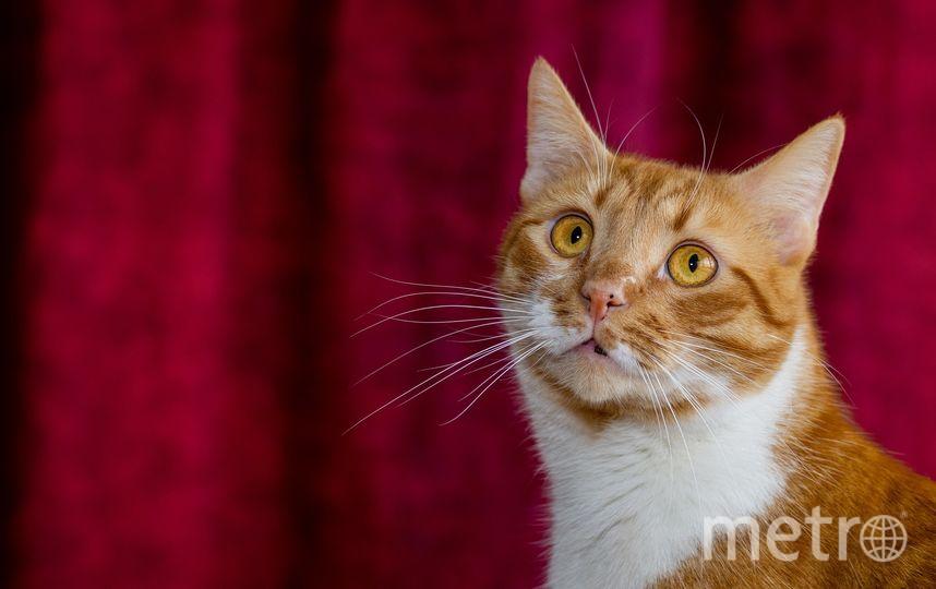 """По словам хозяйки, кот """"отгоняет злых духов, привлекает удачу и благополучие"""". Фото Pixabay"""