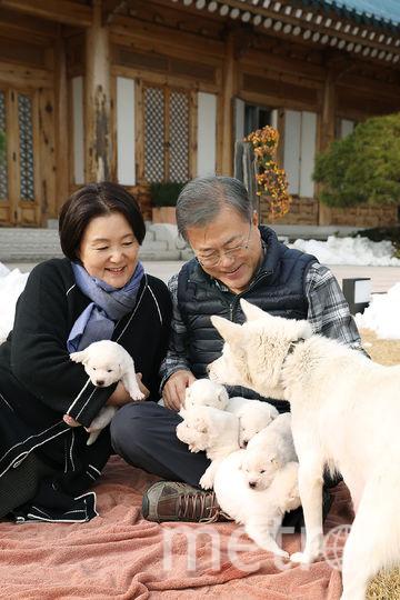 """Собаки породы Пхунсан были """"подарком мира"""" от лидера Северной Кореи. Фото AFP"""