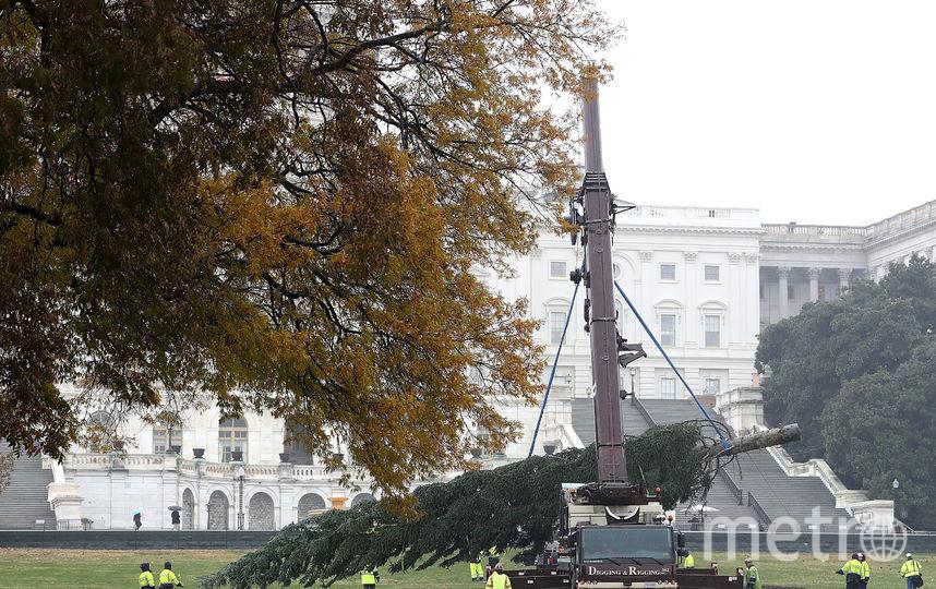 Рождественская ель прибыла к Капитолию. Фото Getty