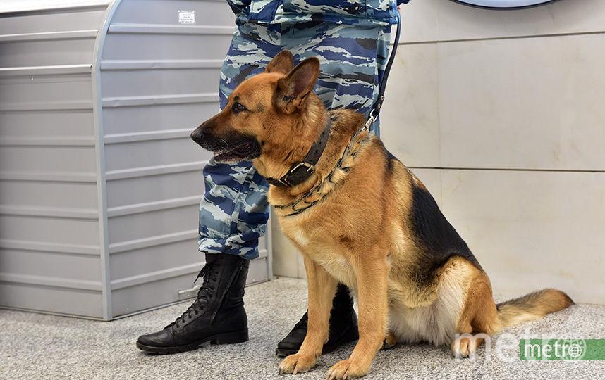 Угроза взрывов в московских ТЦ не подтвердилась. Фото Василий Кузьмичёнок