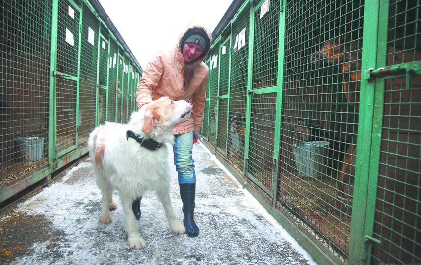 Из-за своенравного характера Багета с ним может гулять только опытный волонтёр вроде Кати Зубенко (на фото). Фото Василий Кузьмичёнок