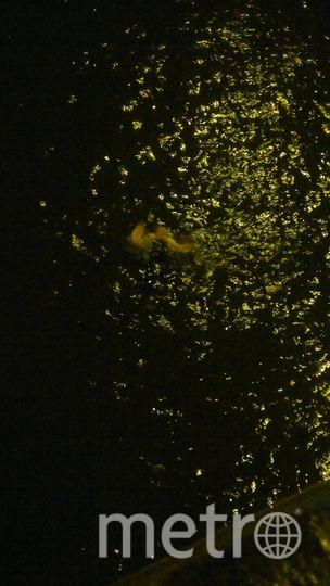 Фото с места происшествия на Обводом канале. Фото vk.com