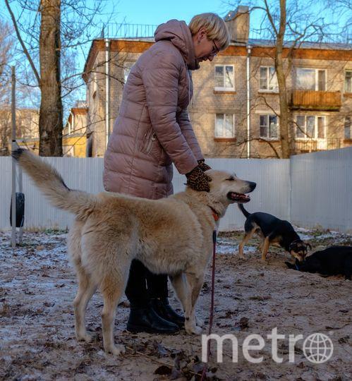 """В петербургском приюте для животных «Полянка» ждут своих хозяев около 60 собак разных пород. Фото Алена Бобрович, """"Metro"""""""