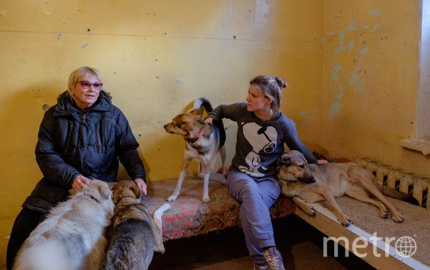 """Инструктор Ксения присматривает за подопечными из приюта. Именно её эти собаки пока считают своей хозяйкой. Фото Алена Бобрович, """"Metro"""""""