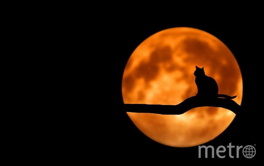 """В день домашних животных будьте добрее к своим питомцам. Фото https://pixabay.com, """"Metro"""""""