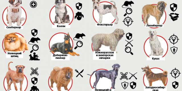 Для чего разводились те или иные породы собак.