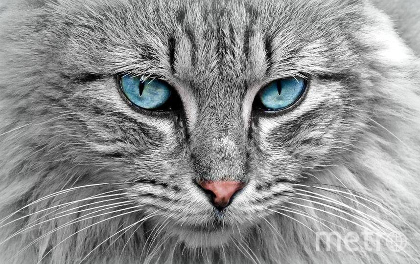 """Кошки – скрытные существа, поэтому их отношение может быть неочевидно. Фото https://pixabay.com, """"Metro"""""""
