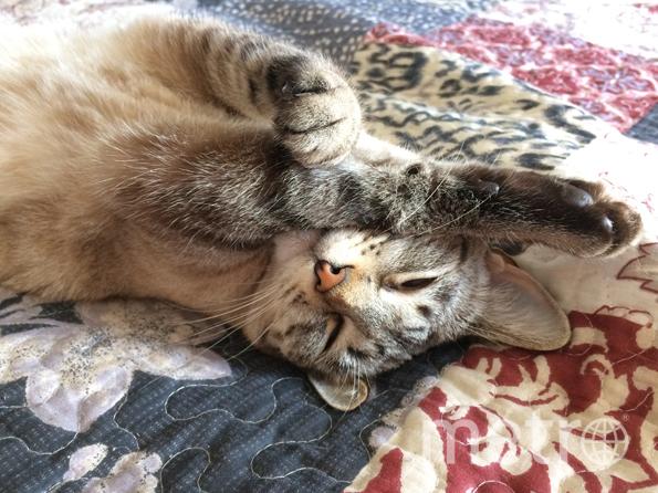 "Кошка Муся. Фото Александр Журавлев, ""Metro"""
