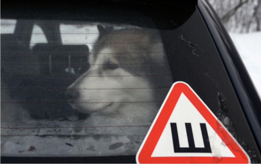 """Знак """"Шипы"""" больше не надо вешать на авто. Фото РИА Новости"""