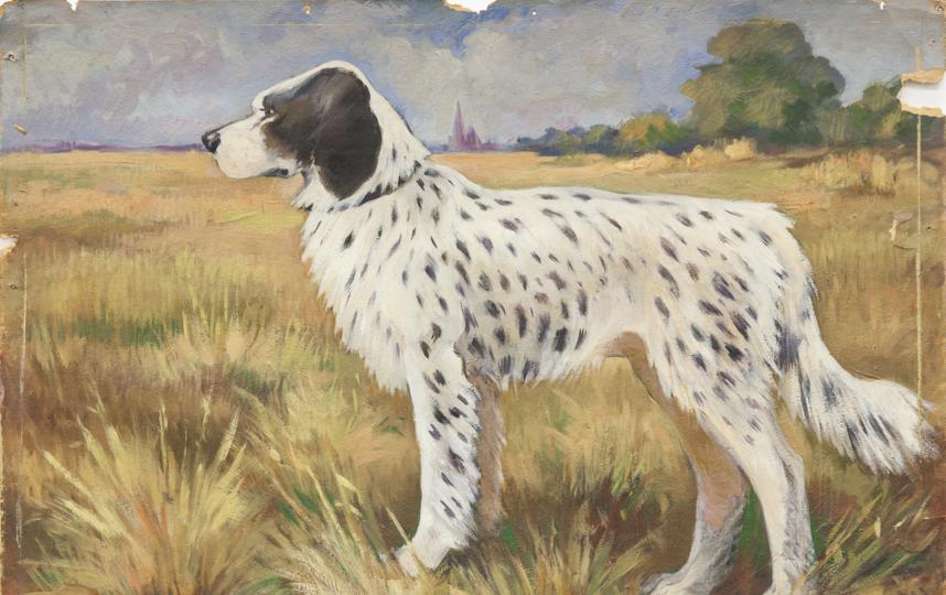 Домашняя собака. Фото Предоставлено Дарвиновским музеем